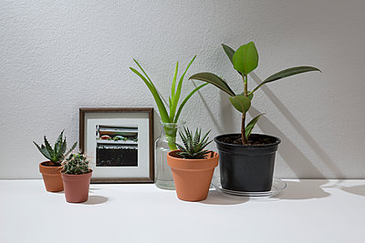 House plants and picture frame - p1149m1133303 by Yvonne Röder