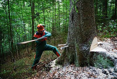Forestry - p1203m1028419 by Bernd Schumacher