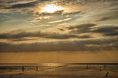 Germany, Dithmarschen, Friedrichskoog-Spitze, Sunset at the North Sea tidelands - p300m1115259f by Dirk Kittelberger