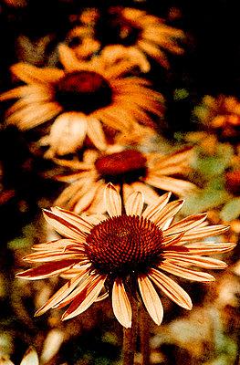 Blumen - p4500050 von Hanka Steidle