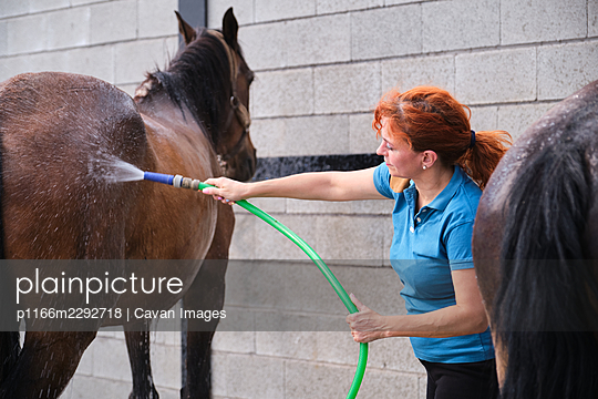Woman washing a horse with a hose in a stable. - p1166m2292718 by Cavan Images