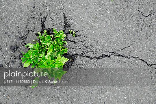 Durchgesetzt - p817m1162863 von Daniel K Schweitzer