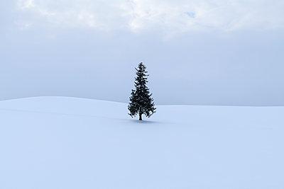 Lone pine tree in the snow, Biei, Hokkaido, Japan - p1166m2108028 by Cavan Images
