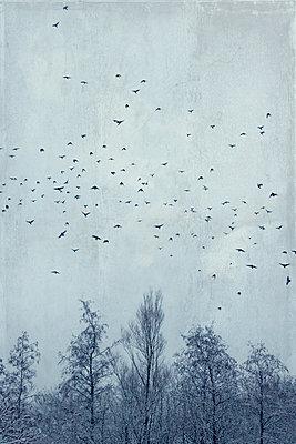 Germany, Wuppertal, Flock of birds flying over bare forest trees in winter - p300m2143700 by Dirk Wüstenhagen