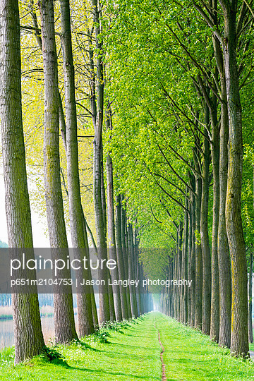 Rows of trees along a canal in spring, Damme, West Flanders, Belgium - p651m2104753 by Jason Langley photography