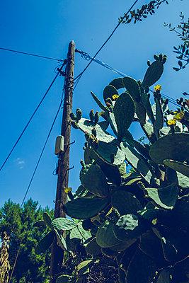 Kaktus - p904m1045001 von Stefanie Päffgen