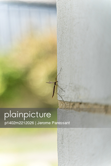 Erdschnake an einer Mauer - p1402m2212026 von Jerome Paressant