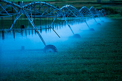 Irrigation system spraying crop field at sunset - p1427m2128268 by Steve Smith