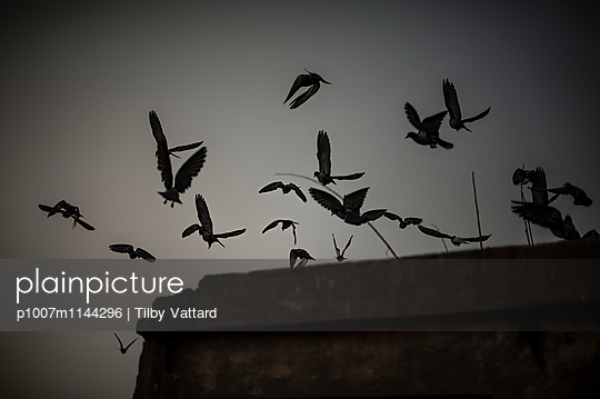Birds flying away - p1007m1144296 by Tilby Vattard