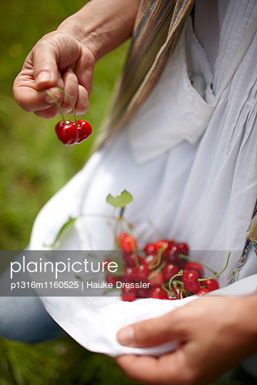Frisch gepflückte Kirschen, Weingut und Agriturismo Ca' Orologio, Venetien, Italien - p1316m1160525 von Hauke Dressler