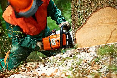 Forestry - p1203m1025859 by Bernd Schumacher