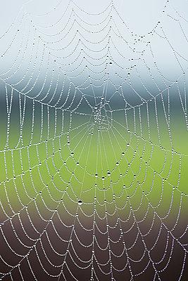 Droplets on cobweb - p312m1063339f by Sara Danielsson