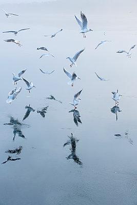 Flock of seagulls  - p739m1104190 by Baertels