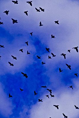 Tauben am Himmel - p8620025 von Michel Gile
