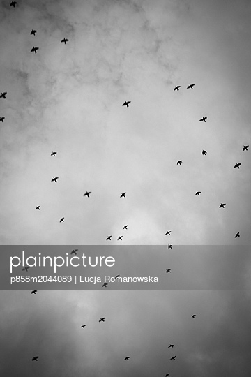 p858m2044089 by Lucja Romanowska