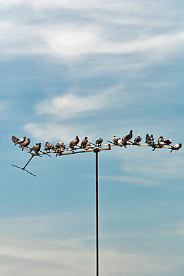 Pigeons on antenna mast - p229m1044384 by Martin Langer