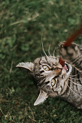 Playful cat - p1507m2172008 by Emma Grann