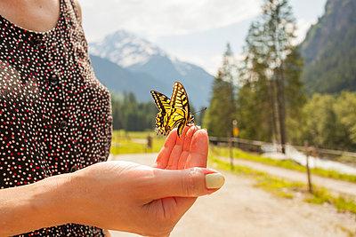 Butterfly on Hand II - p941m907784 by lina gruen