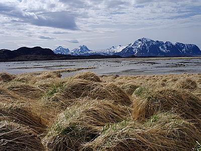 Landscape, lofoten - p945m1497410 by aurelia frey