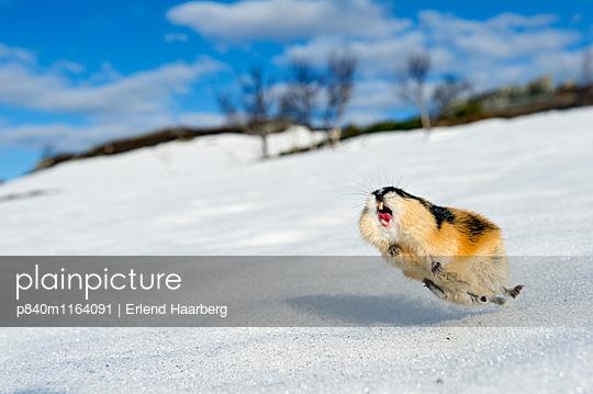 p840m1164091 von Erlend Haarberg