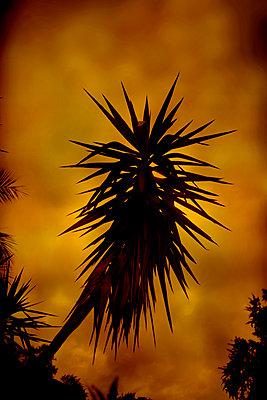 Palm tree - p1028m2214789 by Jean Marmeisse