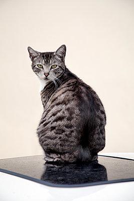 Katze sitzt auf Sonnendach eines Autos - p1248m1185541 von miguel sobreira