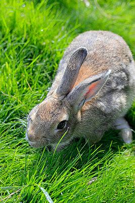 Kaninchen - p450m735054 von Hanka Steidle