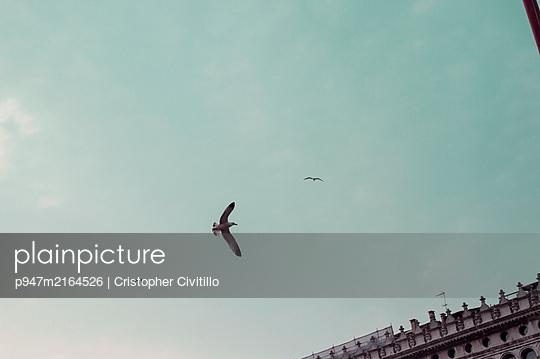 p947m2164526 by Cristopher Civitillo