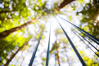 Low angle view of ropes hanging from trees - p1166m1150467 by Cavan Images