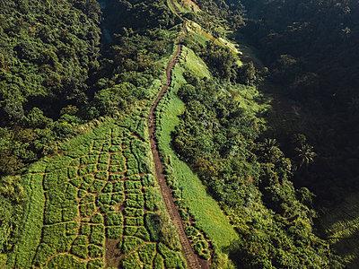 Indonesia, Bali, Ubud, Aerial view of path at hills - p300m2042733 von Konstantin Trubavin