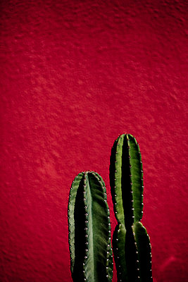 Cactus at home - p4451024 by Marie Docher
