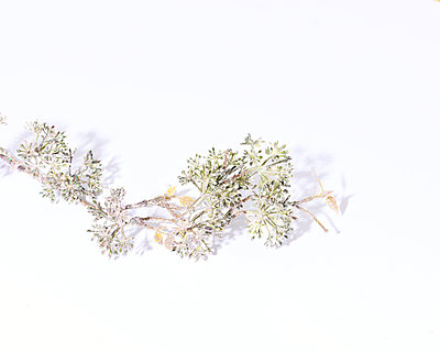 Twig with glitter - p1190m2228762 by Sarah Eick