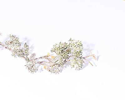 Zweig mit Glitter - p1190m2228762 von Sarah Eick