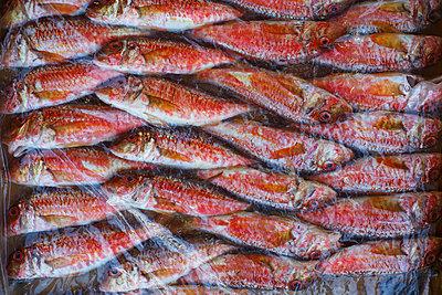 Frischer Fisch - p1357m1207513 von Amadeus Waldner