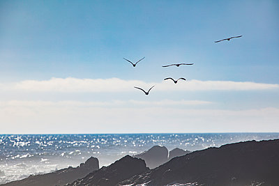 Africa, South Africa, Cape Town, Flock of birds flying over the sea and rocks - p300m1586985 von zerocreatives