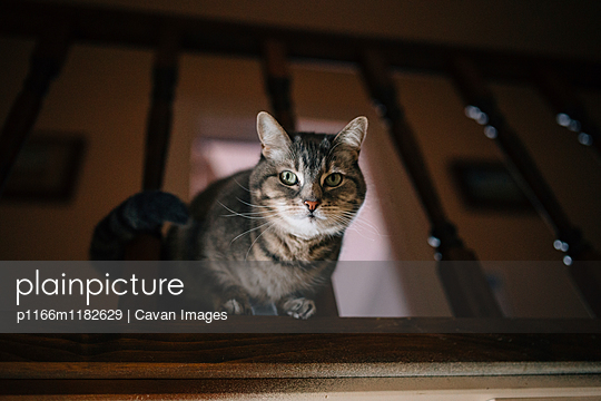 p1166m1182629 von Cavan Images