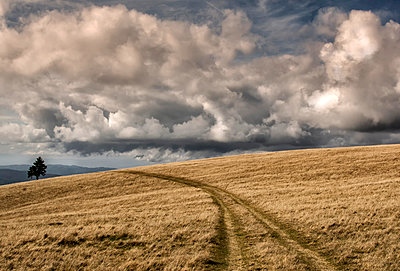 Road in Charpathians mountains - p1072m1106065f by Grigore Roibu