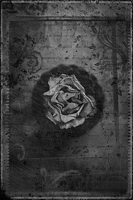 Vertrocknete Rose Stillleben - p1468m1527617 von Philippe Leroux