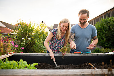 Woman sowing seed while planting in garden with boyfriend - p300m2264767 by Annika List