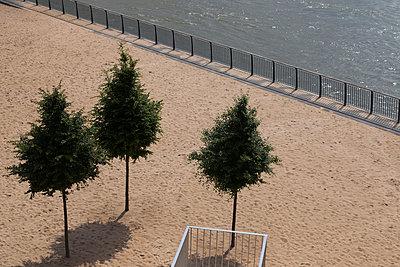 Drei Bäume - p497m903865 von Guntram Walter