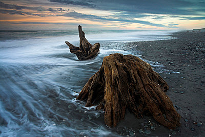 The remains of enormous long-dead trees lie scattered on Gillespies Beach - p8714084 by Adam Burton