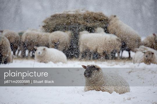 p871m2003585 von Stuart Black