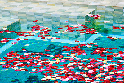 Swimming Pool with Rose Petals - p1100m2090884 by Mint Images