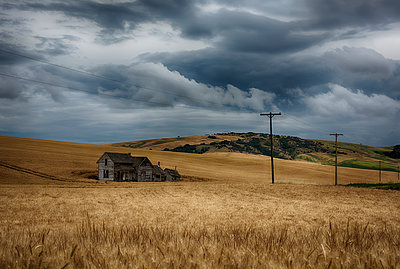 Old, rustic wooden house in the middle of a golden field under a stormy sky; Palouse, Washington, United States of America - p442m1179999 by Marg Wood