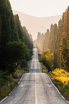 Viale dei Cipressi (Cypress Avenue), Bolgheri, Livorno province, Tuscany, Italy. - p651m2271065 by Marco Bottigelli