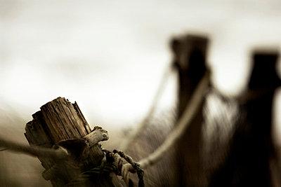 Wood Grain - p9792867 by Zickert