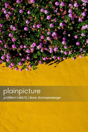 Blumenbeet - p1299m1148472 von Boris Schmalenberger