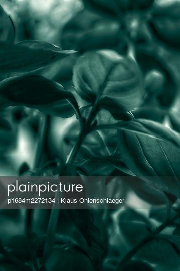 Basil - p1684m2272134 by Klaus Ohlenschlaeger