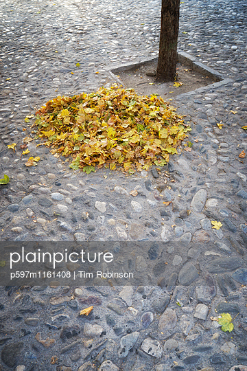 Laubhaufen auf Pflastersteinen - p597m1161408 von Tim Robinson