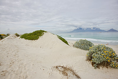 South Africa, Beach walk with dog - p1640m2245945 by Holly & John